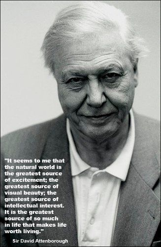 Sir David Attenborough | quoteables | Pinterest