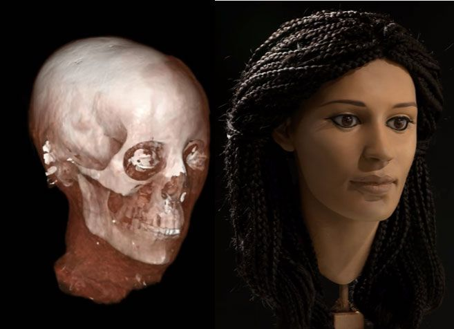 Newsletter 52 The Reconstruction of Meritamun's Face Forensic Facial…
