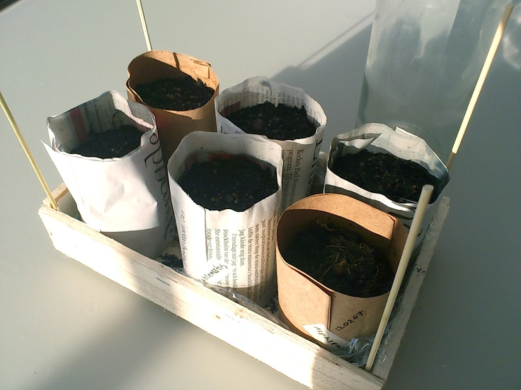 my home made newspaper pots for seeds. environmental friendly and very easy to make.
