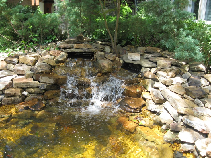 43 best images about goldfish pond on pinterest backyard for Goldfish pond ideas