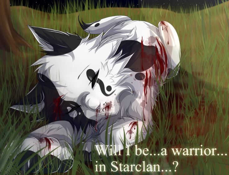 517 Best Warrior Cats Images On Pinterest