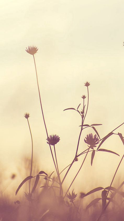 Flower Nature Fall Romantic Cold  #iPhone #6 #plus #wallpaper
