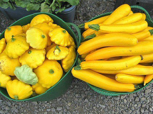 Let's face it -- when squash starts coming in from your garden, you're loaded with them! Putting up squash in your freezer is so easy! It's a fantastic way to enjoy all that goodness year-round.