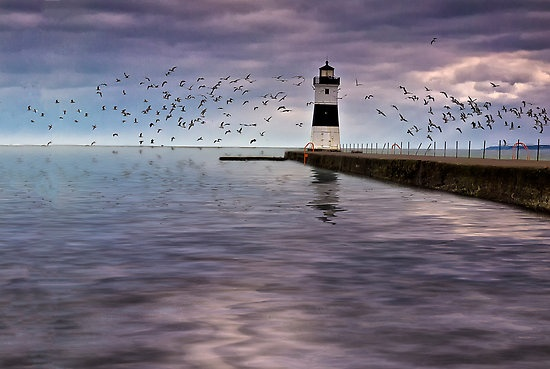 1000 images about presque isle erie pa on pinterest for Lake erie pier fishing