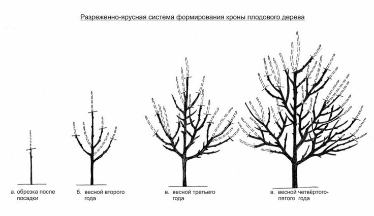 Обрезка деревьев зимой – подробные действия и необходимые инструменты! + Видео