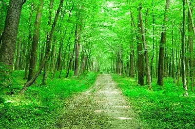 Finland...no wonder I appreciate nature so much