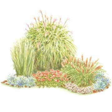 Colorful front yard garden plans grasses ornamental for Short landscape grasses