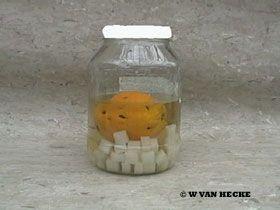 Sinaasappellikeur zelf maken.....met jenever
