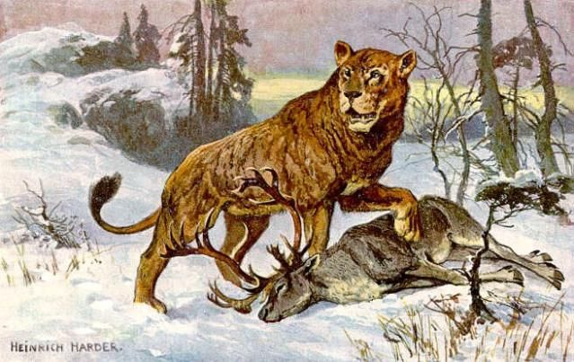 Cave Lion Facts: The Cave Lion, Panthera leo spelaea (Heinrich Harder)