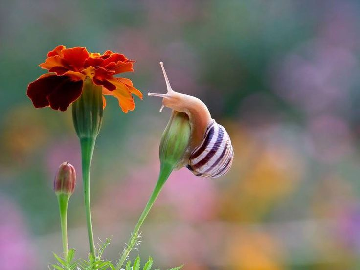 fleur-rouge-escargot
