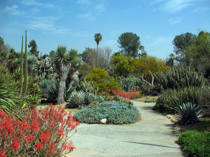 15 Best Images About Inspiration Palm Springs On Pinterest Gardens Agaves And Pears