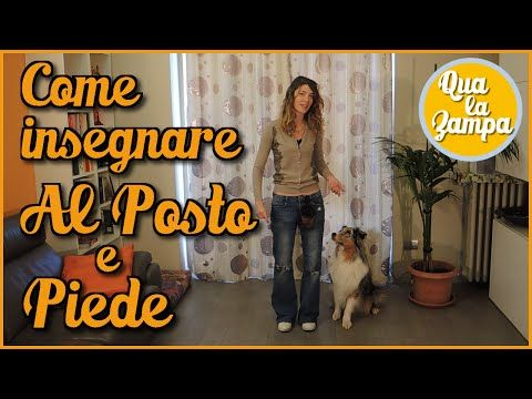 Addestramento/Educazione cani n°15 - Come insegnare al cane a passare SOTTO le gambe   Qua la Zampa - YouTube