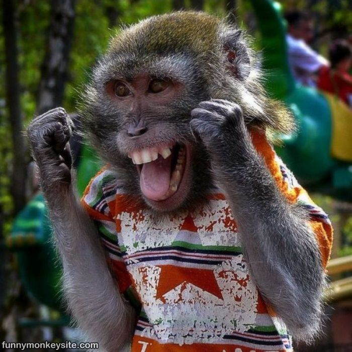 monkey | Happy Monkey - Funny Monkey Pictures