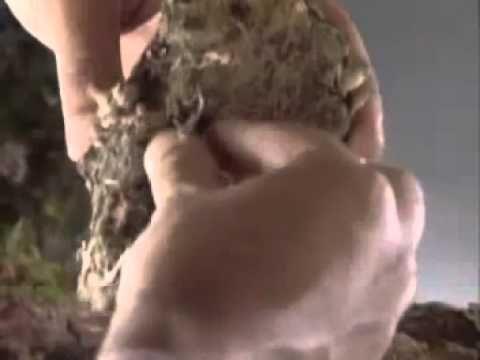 O reino dos fungos. - Vídeo no  que se describe as características do reino Fungi, a súa forma de reproducción e exemplos de diferentes aplicaciones dos fungos.
