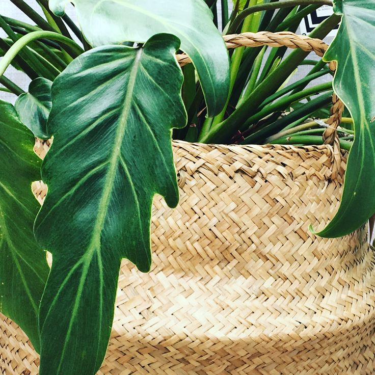 Products from Arizona Living as featured in The Planthunter Directory, for more visit https://arizonaliving.com.au/