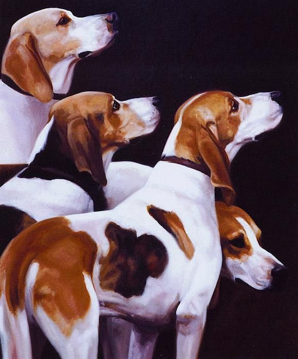 George Washington breed what we know today is the American Fox Hounds, so beautiful