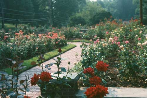 17 Best Images About Botanical Gardens To Visit On Pinterest Gardens Virginia And Vero Beach