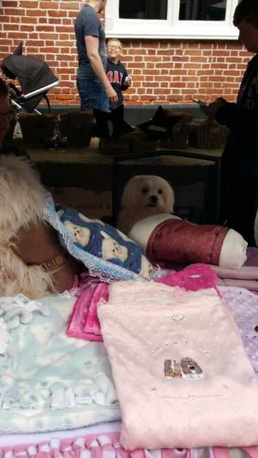 Middlewich Market  #Maltese #canihelpyou?