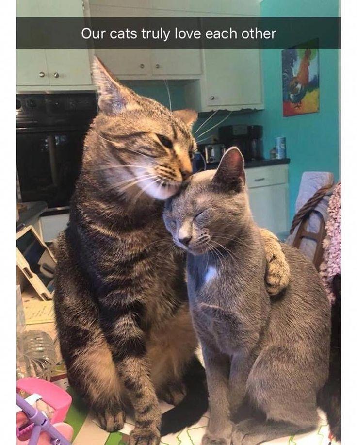Awww… they're so sweet 💕 #catloverscommunity #catsandkittens