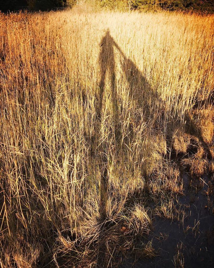 Gold #gold #autumn #shadow #nature #finland #igershelsinki