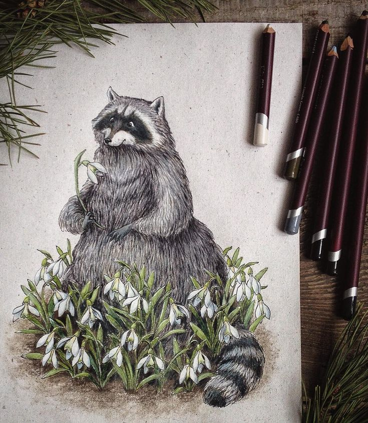 """Весенний енот к весне готов #snowdrops #SpringIsComing #springflowers #flowers #spring #february #art #myart #racoon #pencils #colorpencils…"""