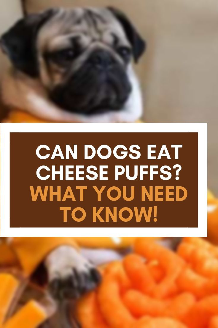 Can Dogs Eat Cheese Puffs What You Need To Know Can Dogs Eat