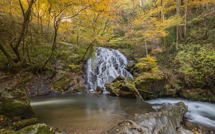 Download wallpapers forest waterfall, autumn, lake, forest, autumn landscape, beautiful waterfall