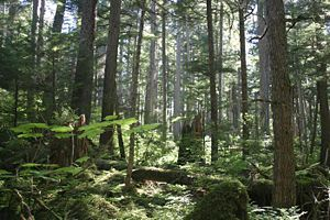Tongass National Forest in Alaska, mostly temperate rain forest