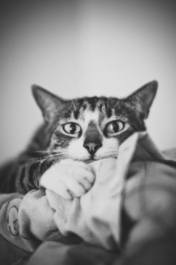 Watch me.  © Marta Mandryto