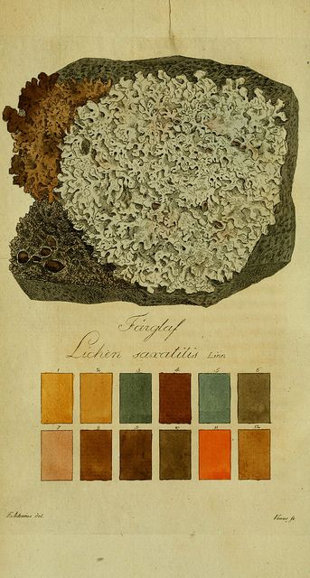 lichen. Just add purple and more blues and then it would be the perfect color palette.