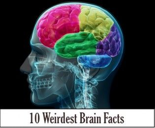 10 Weirdest Brain Facts