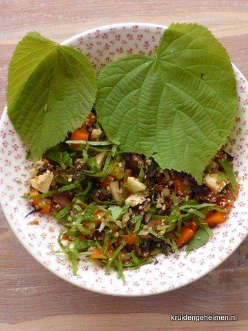 Linde bladeren Kruidengeheimen, heerlijk in salade of gekookt zoals spinazie