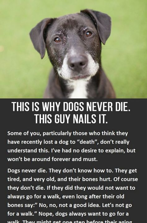 This Is Why Dogs Never Die Dog Stuff Dogs Puppies Pets