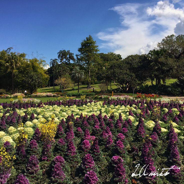 The Brisbane City Botanic Gardens, Queensland Australia.