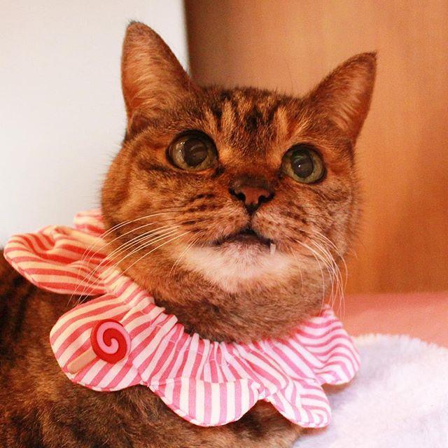 maihimemoco いいお天気でいつもよりも #チラキバ が輝いてるわ✨ #日暮里繊維街 で買い付けた生地でザビエル製作してもらってるの。6年間パッチワークを習っていたお母さんに🍭猫変態の母なのでまぁ、猫変態です。 今日くらいに大阪に少し届いたと思います。 #ねこ休み展 で見ていただけたらうれしいです♪26日は私もなんばに遊びに行きます!✈️楽しみ🐱  #16歳のモコ  #moco16yearsold  #ザビエルモコ #ザビエラー  2017/03/22 16:58:02
