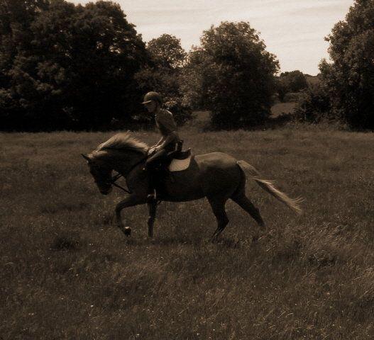 #Horse #TheGoodOldDays