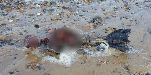 Putri Duyung Ditemukan Terdampar di Pantai Inggris - Inilah.com