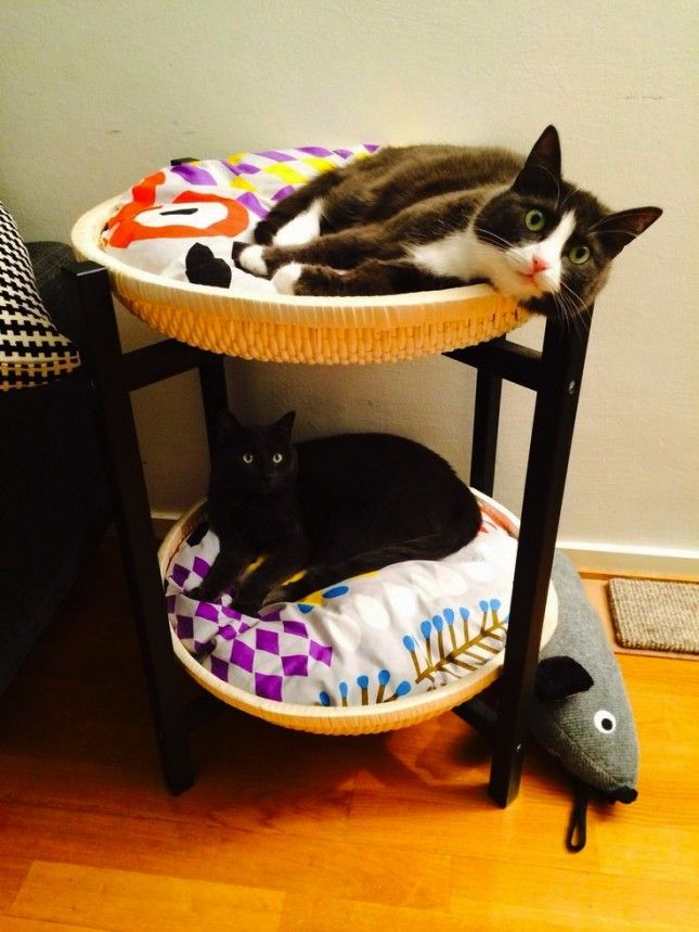 Bookmark this IKEA hack to make bunk beds for your cats.