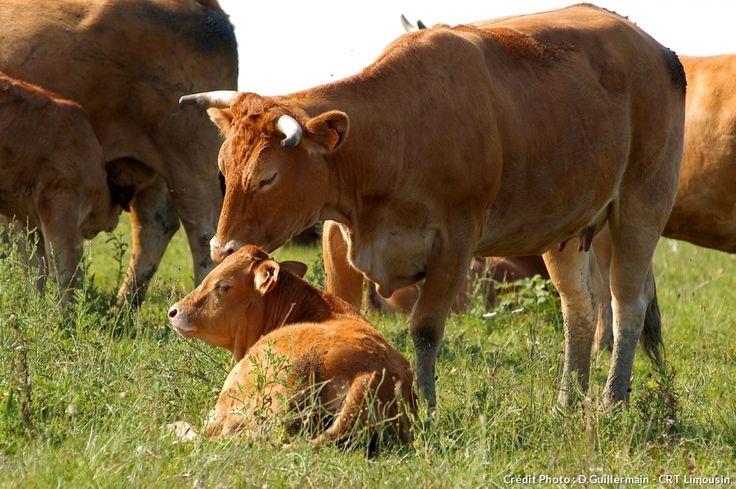 5 choses que vous ne saviez sûrement pas sur le Limousin
