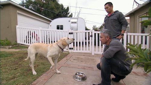 Worst Dog Breeds For Biting