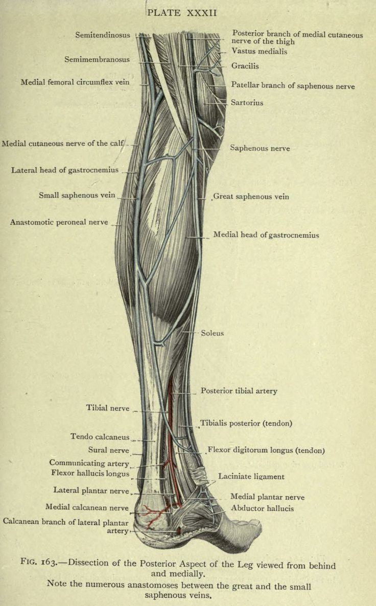 The 469 best Vintage Anatomy images on Pinterest | Medical history ...