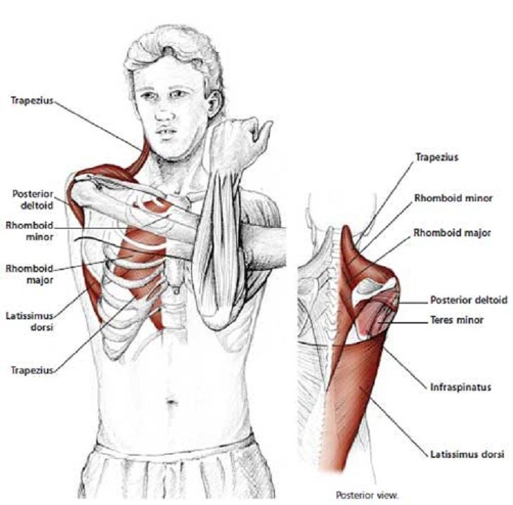17+ How to loosen tight neck and shoulder muscles ideas