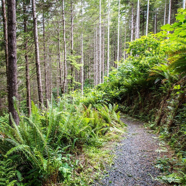 58 best Lewis And Clark Trail images on Pinterest | Lewis and clark ...