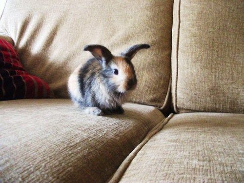 hopDogs, Couch, Camo, Minis Dog Qu, Christmas Presents, Colors, Baby Bunnies, Cute Bunnies, Bunnies Rabbit
