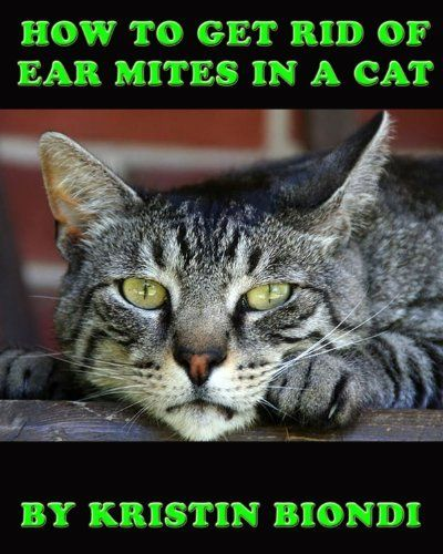 How Can You Tell If A Cat Has Mites