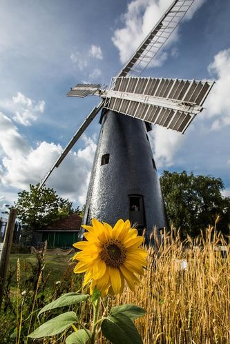 Brixton WindmillWindmill Gardens, Off Brixton Hill, SW2 5EU. Apr-Oct, every second weekend of the month, 2pm-5pm.