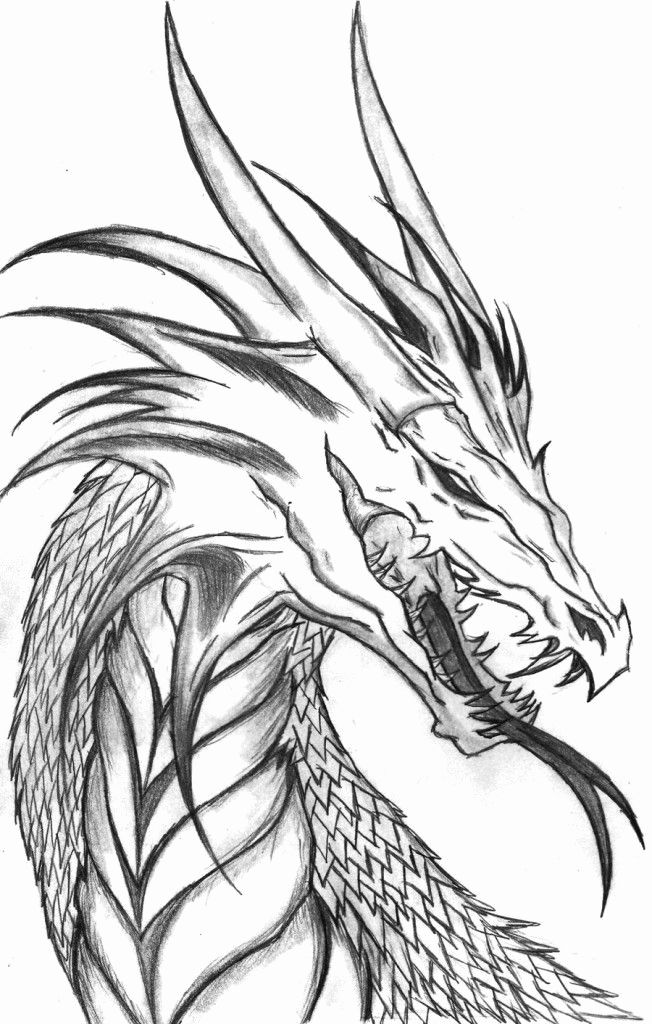 Wyvern Dragon Coloring Pages For Kids Cool Dragon Drawings Dragon Coloring Page Dragon Drawing