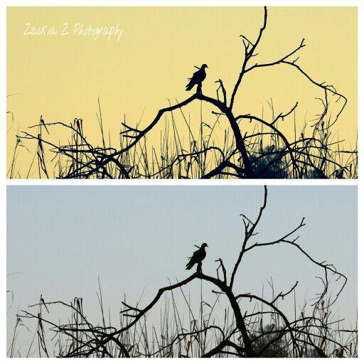 Birdie at dusk..