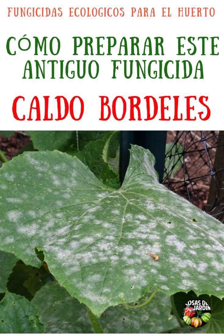 El Fungicida Mas Antiguo Del Mundo Caldo Bordelés Receta Cosas Del Jardin Plantas De Tomate Fertilizante Para Plantas Cultivo De Hortalizas