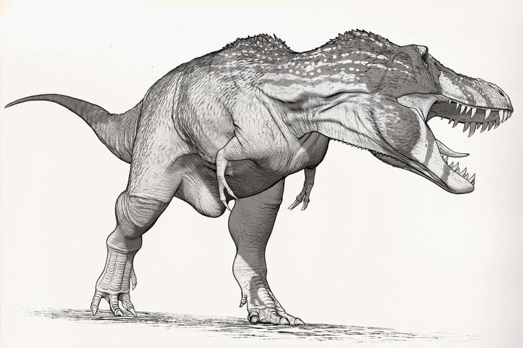Raúl Ramos - Tyrannosaurus rex